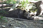 Bärenpark_Worbis