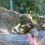Fotos Tierpark Suhl