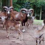 Tierpark-Gera