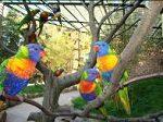 Tierpark Suhl Loris