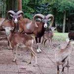 Tierpark Gera